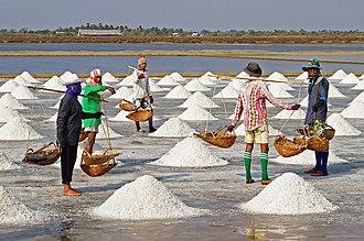 Sea salt - Sea salt harvesting in Pak Thale, Phetchaburi, Thailand