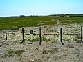 Saltmarsh, East Head - geograph.org.uk - 522918.jpg