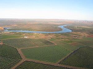 Kununurra, Western Australia - Indian Sandalwood plantations at Kununurra