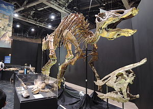 Saurolophus - S. angustirostris skeleton and skull