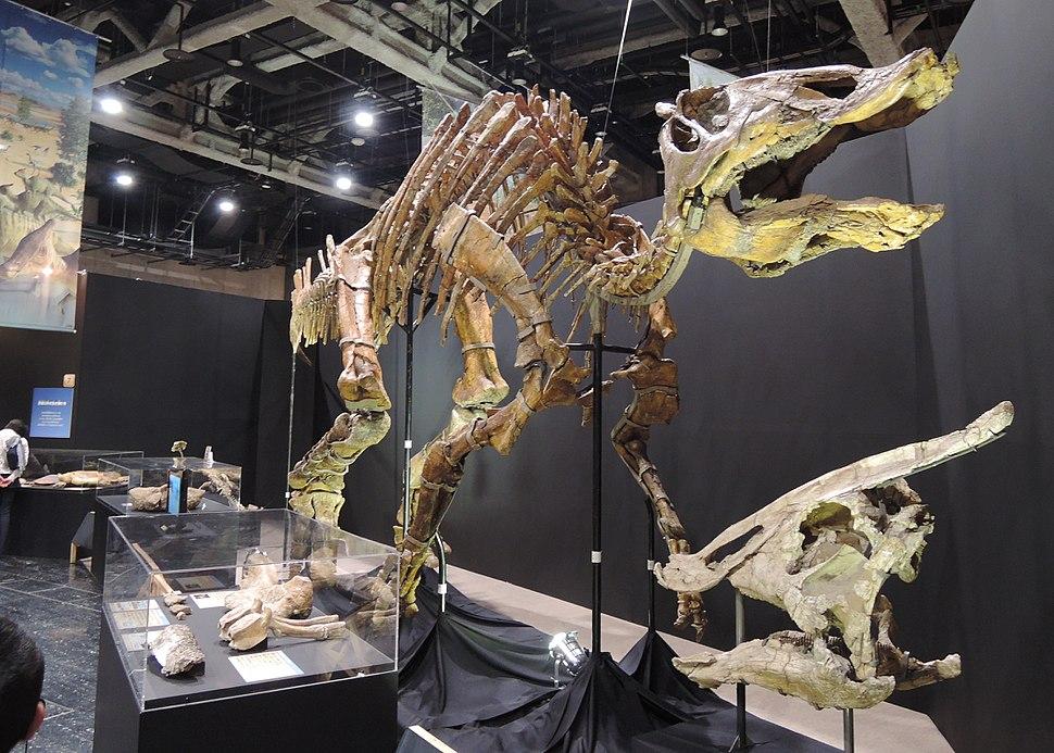 Saurolophus mount