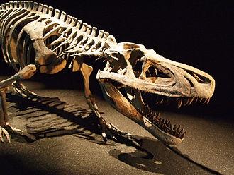 Pseudosuchia - Mounted skeleton of the Triassic loricatan Saurosuchus galilei