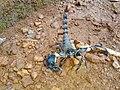 Scorpion (10).jpg
