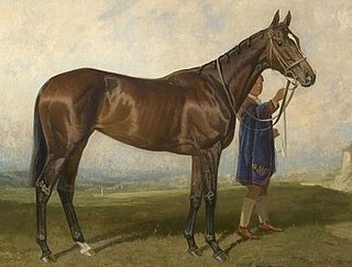 Scuttle (horse) British-bred Thoroughbred racehorse
