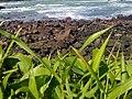 Sea, Rocks, Plants in Menganti Beach.jpg