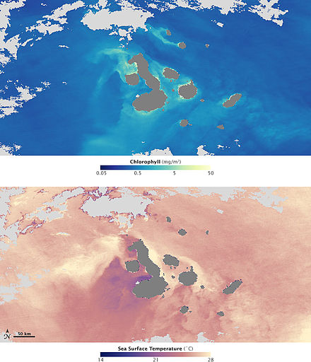 The bottom image shows sea surface temperature, cool upwelling waters are coloured purple. Thriving phytoplankton populations are indicated by high chlorophyll concentrations (top image), coloured green, and yellow. Images acquired on 2 March 2009. Sea surface temperature & chlorophyll concentrations off the Galapagos archipelago.jpg