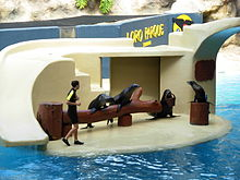 Seals at Loro Parque 06.JPG