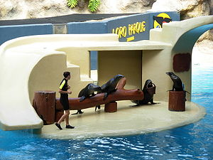 Loro Parque - Sea lions perform in Loro Parque