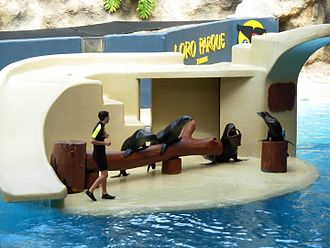 Loro Parque - Sea lions perform in Loro Parque