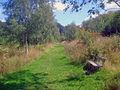 Seat in Willesley Wood - geograph.org.uk - 1501212.jpg