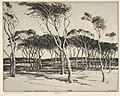 Seaward Pines, Nantucket MET DP832892.jpg
