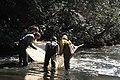 Seining in Shoal Creek (2) (5164678916).jpg