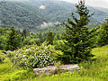 Seneca-Tree-Bush ForestWander.JPG