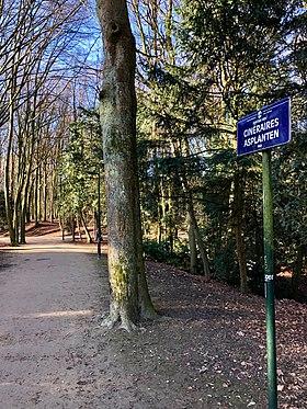 Image illustrative de l'article Sentier des Cinéraires