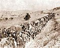 Serbian colonne retreat through Albania 1915.jpg