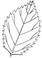 Serrated leaf (PSF).png