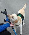 Servicehund.jpg