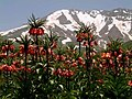 Shamizdin Flowers.jpg