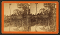 Silver Springs, Fla, from Robert N. Dennis collection of stereoscopic views.png