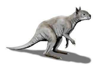 Fossil Cave - Reconstruction of the giant kangaroo Simosthenurus occidentalis