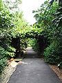 Singapore Botanic Gardens, Evolution Garden 2, Sep 06.JPG