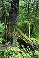 Sitka, Alaska (7708798612).jpg