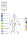 Skin-Microbiome-Human.png