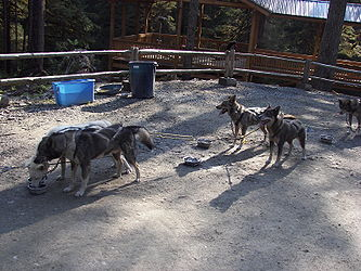 Sled Dog Discovery & Musher's Camp 9.jpg