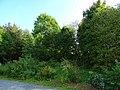 Sledding Path Seminarstraße - Hohe Straße, Pirna 125353935.jpg
