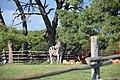 Slobodno kretanje životinja u nacionalnom parku Brijuni (6).jpg