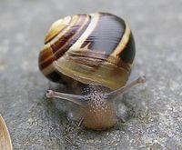Snail in house, closeup.jpg
