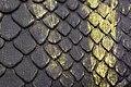 Snake Skin Texture (15).jpg