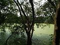 Snap from Bannerghatta National Park Bangalore 8419.JPG