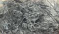 Snipes in nest by Bruno Liljefors 1890.jpg