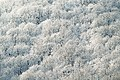 Snowy trees in Russia (Unsplash).jpg