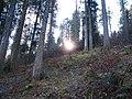 Sommerlicher Herbst Herrenstuhl - panoramio (18).jpg