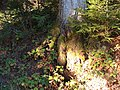 Sommerlicher Herbst Herrenstuhl - panoramio (5).jpg