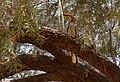 Southern yellow-billed hornbill (37729587172).jpg