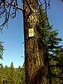 Spokane, WA, USA - panoramio (9).jpg