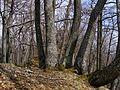 Spoločné korene - panoramio.jpg