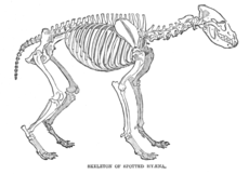 Image Result For Hyena Printable Coloring