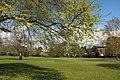 Spring in Epsom (7197740280).jpg