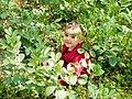 Spring time lattakia Alfakhoura.jpg