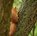 Squirrel Slice.jpg