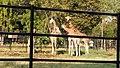 Sri Chamarajendra Zoological Gardens (Mysore Zoo), Image (37), Mysore, Karnataka, India.jpg