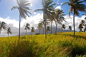 The Sugar Cane - St Kitts landscape