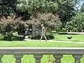 St Charles Avenue at Audubon Park New Orleans 11 June 2020 32.jpg