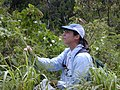 Starr-020620-0042-Coccinia grandis-habit with Kim-Kapalua-Maui (24441630872).jpg
