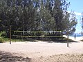 Starr-040704-0027-Casuarina equisetifolia-view volleyball courts-Kanaha Beach-Maui (24713760995).jpg