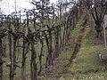 Stockkultur Holzzeile.jpg
